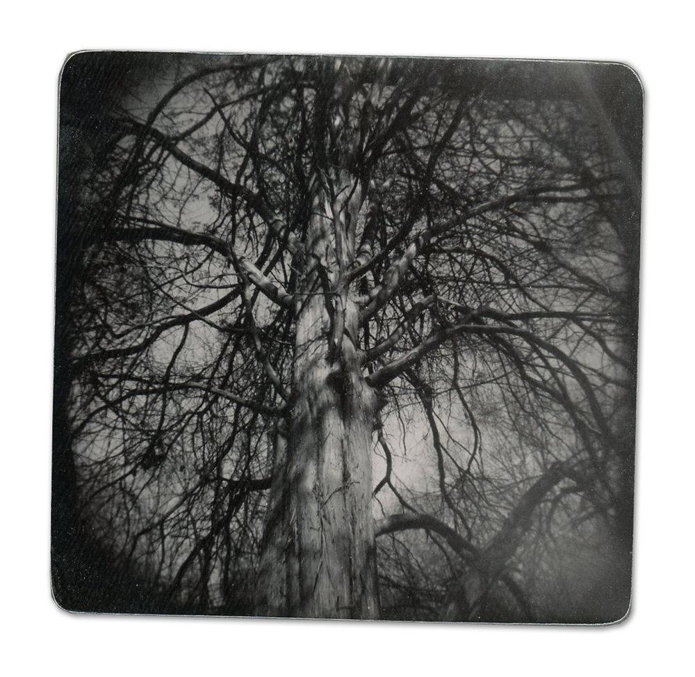 Dead Tree (Unique polaroid print mounted on cardstock)