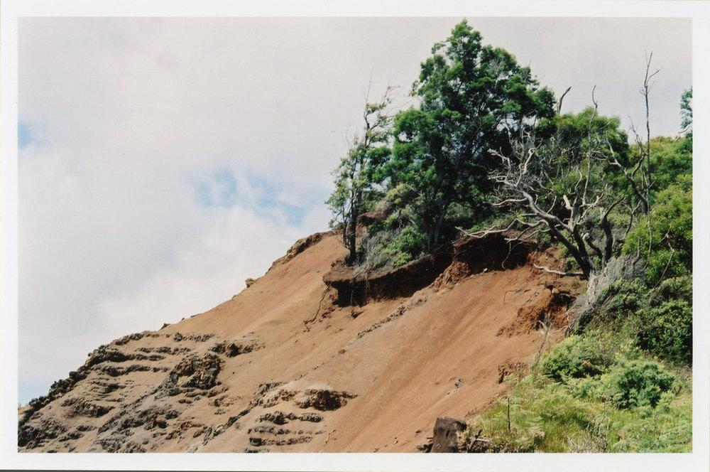 Landscape, 2003