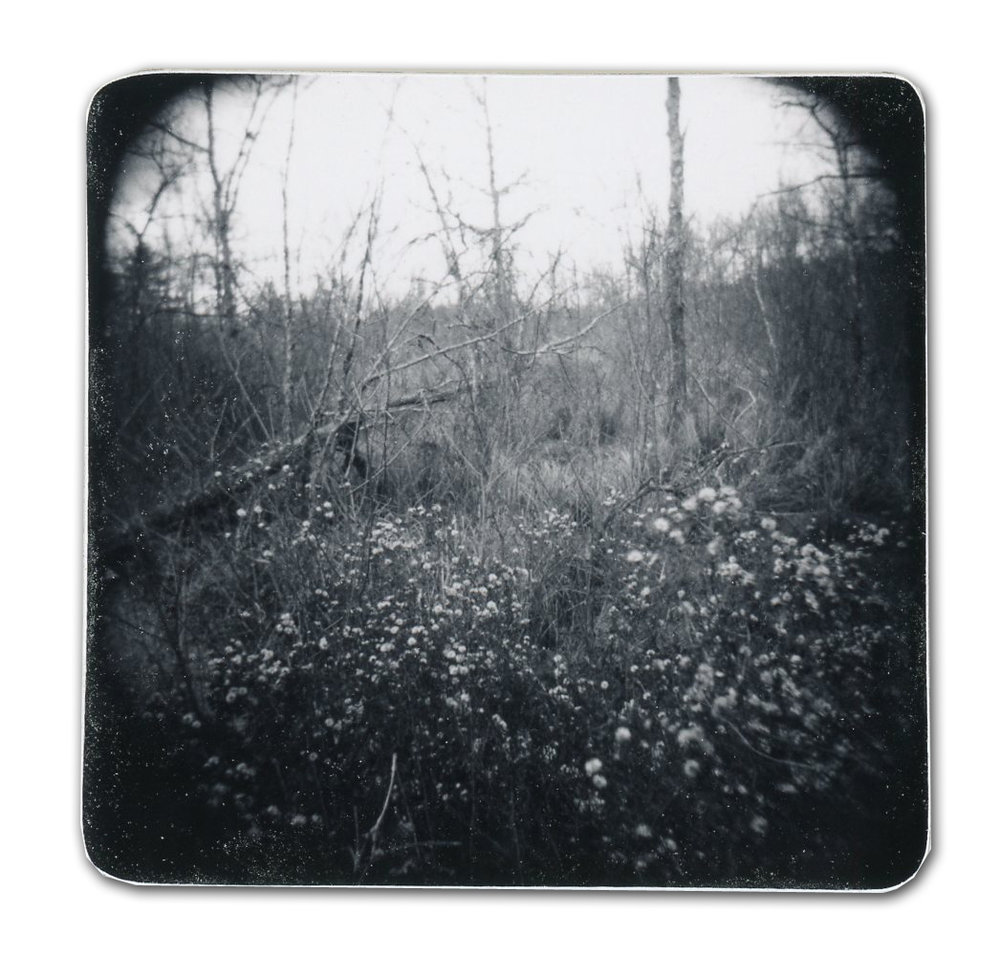 Flowers (Unique polaroid print mounted on cardstock)