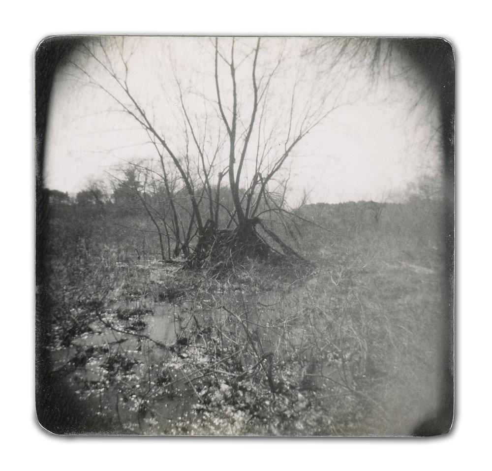 Swamp (Unique polaroid print mounted on cardstock)