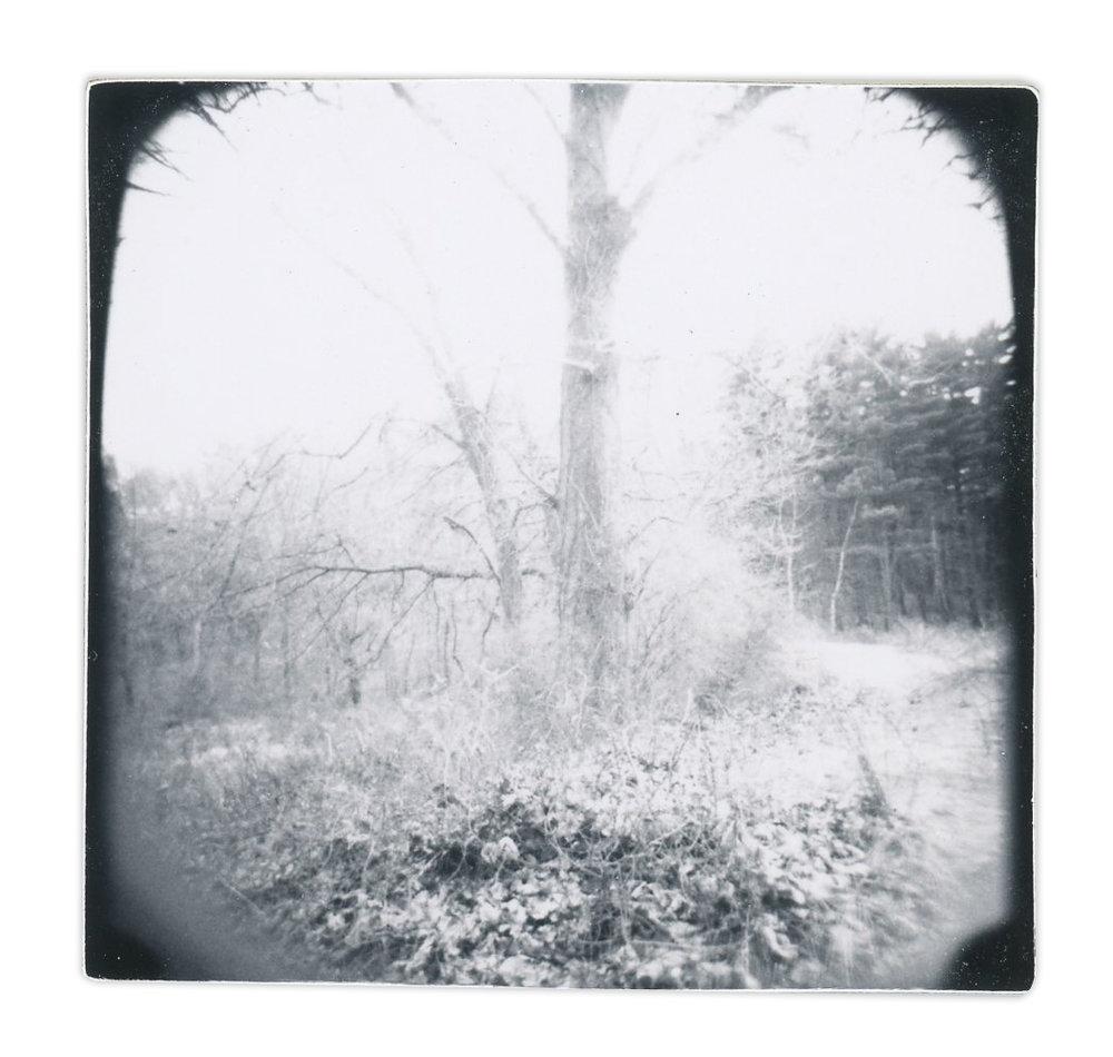 Tree (Unique polaroid print mounted on cardstock)
