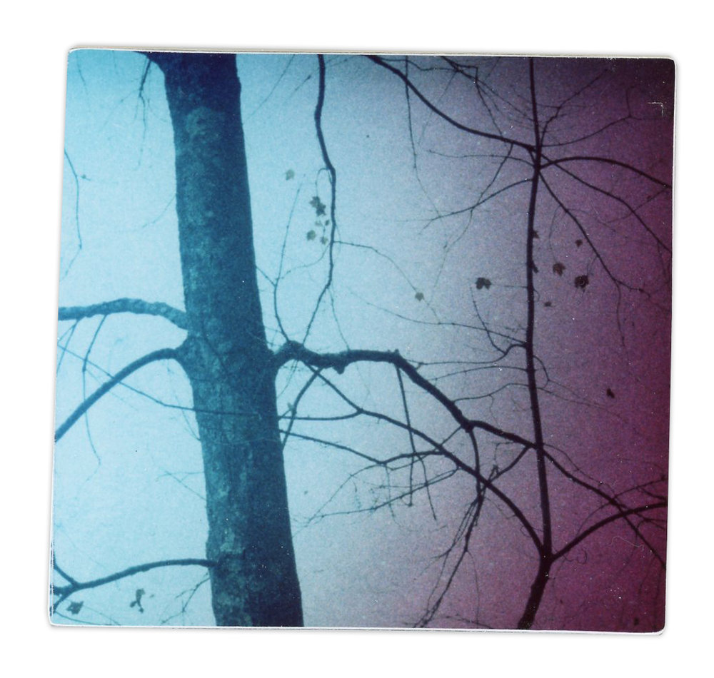 Tree (Polaroid printed from sandwiched slides)