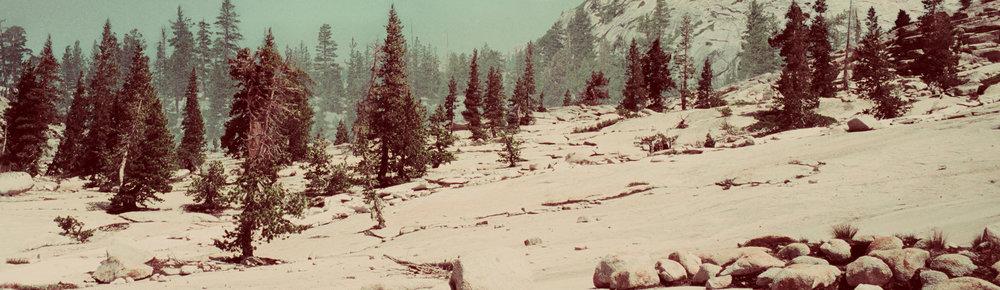 Yosemite Landscape, 2018
