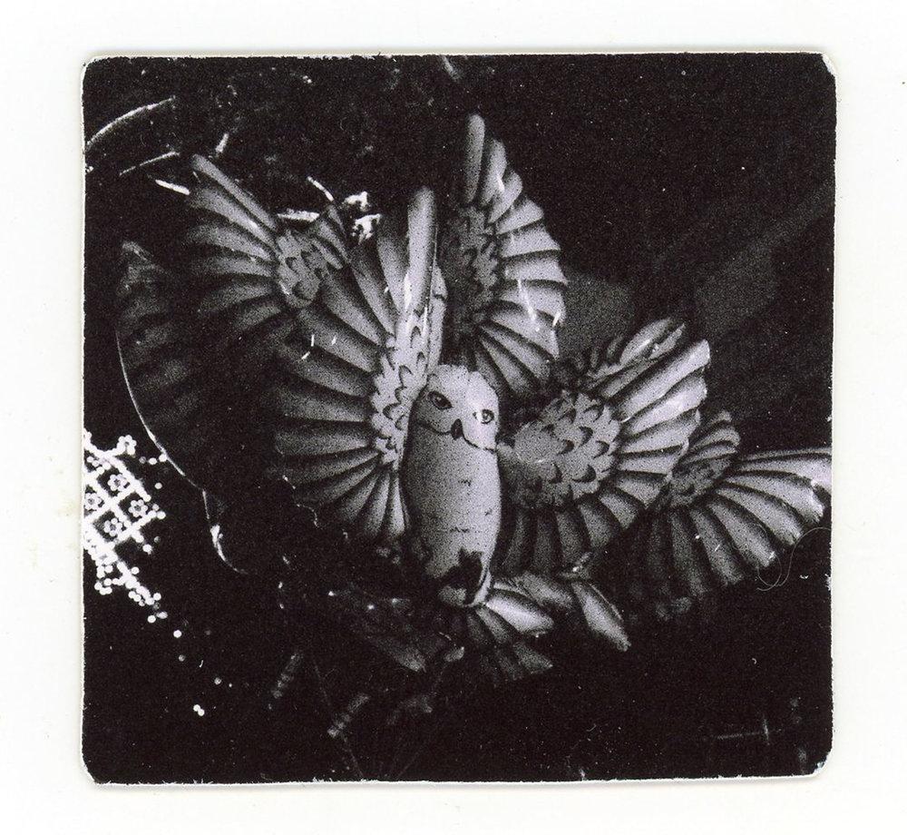 Owl (Sicily) (Silver gelatin print mounted on cardstock)