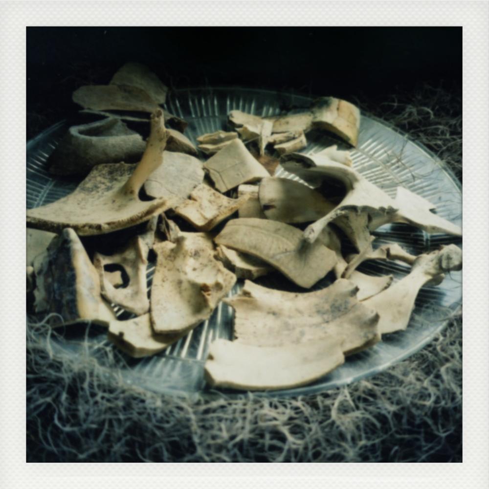 Bone Fragments.jpg