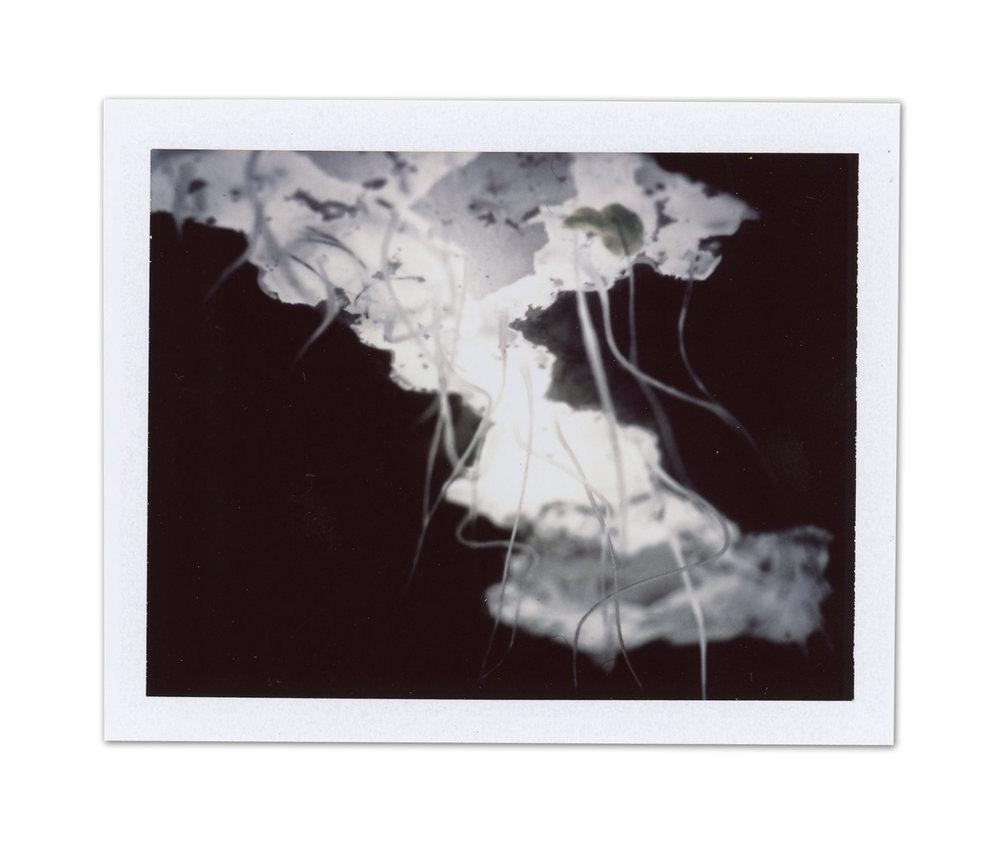 Study / Polaroid