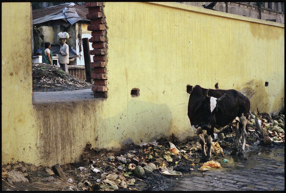 Calcutta-37.jpg