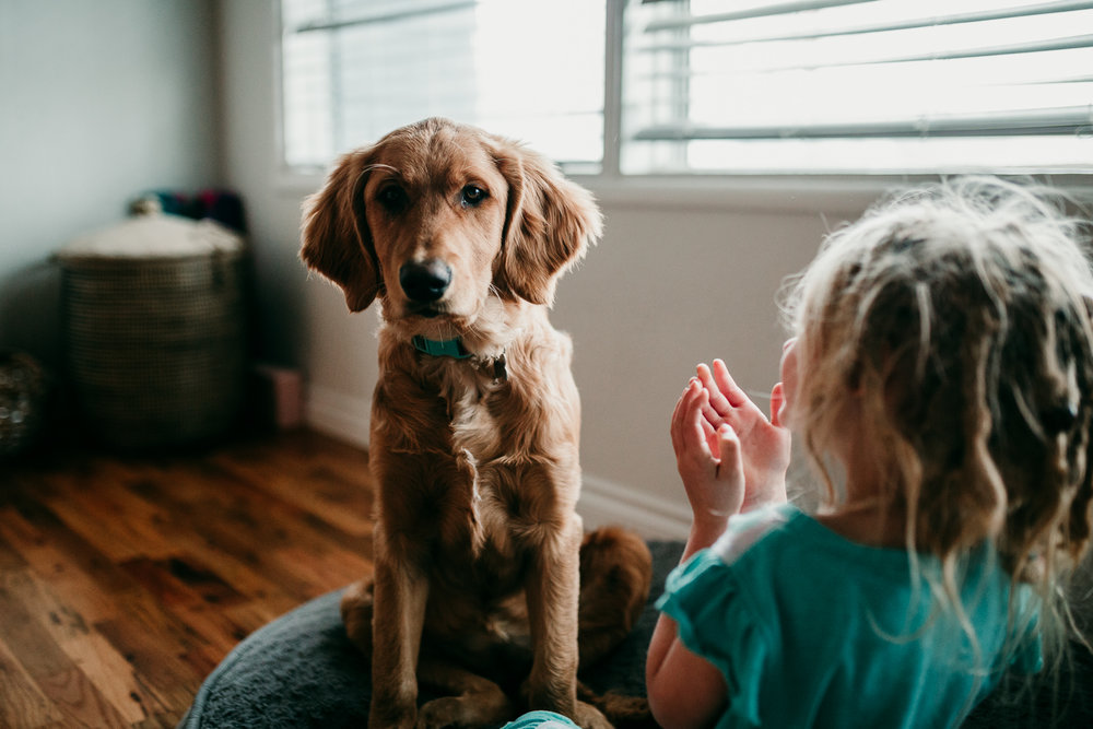 Golden-Retriever-Toddler-Southern-Oregon-Lifestyle-Photographer-1.jpg