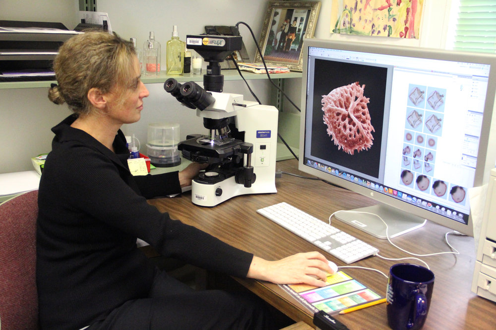 Sophie Warny analyzes pollen and spores in her lab at LSU. Image credit: LSU College of Science.