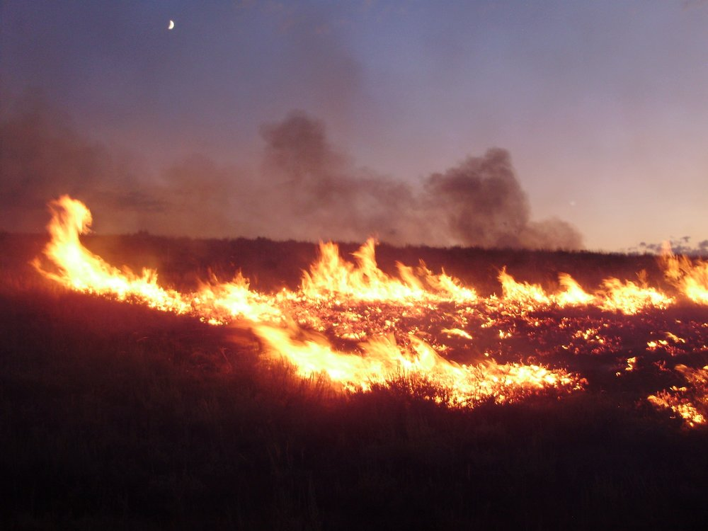 Fire. Image credit: Famartin, CC BY-SA 3.0, posted to Wikipedia.