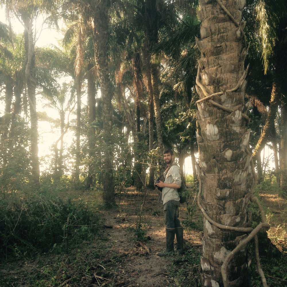 Graduate Student Ryan Terrill in a stand of palms in Santa Cruz, Bolivia.