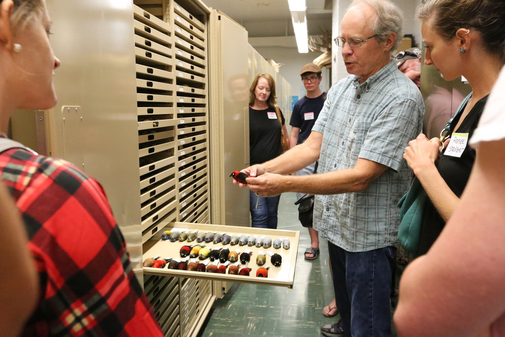 Curator Van Remsen gives a behind-the-scenes tour of the famous tanager bird collection at the museum. Image: Paige Jarreau.