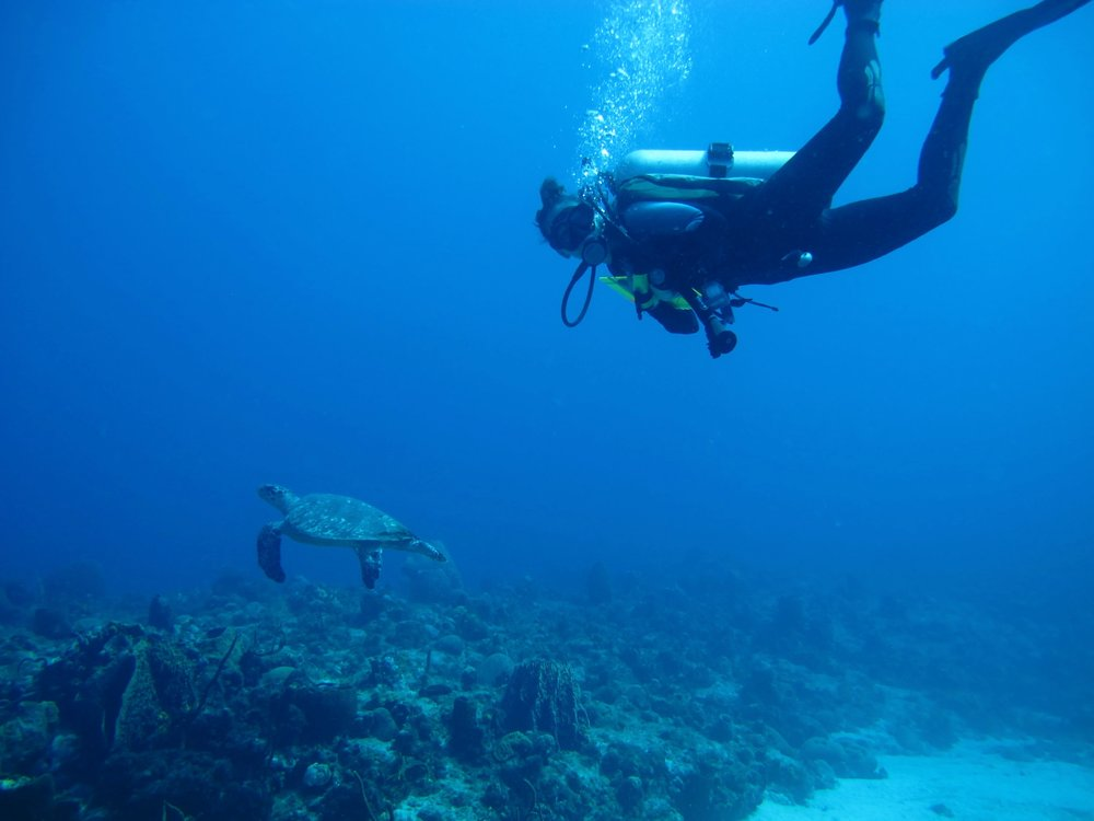 Alicia Reigel with a gorgeous sea turtle at Desecheo Marine Reserve in Puerto Rico. Photo Credit: Nick Hammerman.