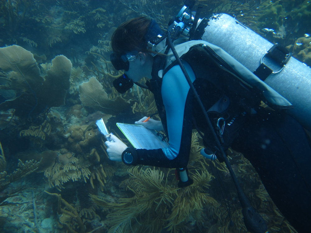 Alicia collecting metadata (size, location, depth, health) of a coral in Las Lajas, Puerto Rico. Photo Credit: Nick Hammerman.