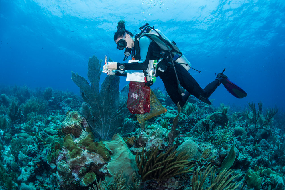 """You can see I carry a lot of extra equipment underwater so it makes scientific diving more difficult."" - Alicia Reigel. Photo Credit: Paul Allerton Photography."