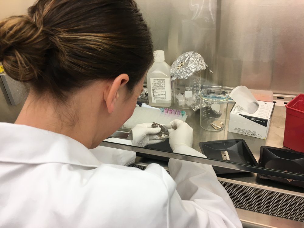 Alicia scraping coral tissue under the bio-hood in the Thrash Lab.