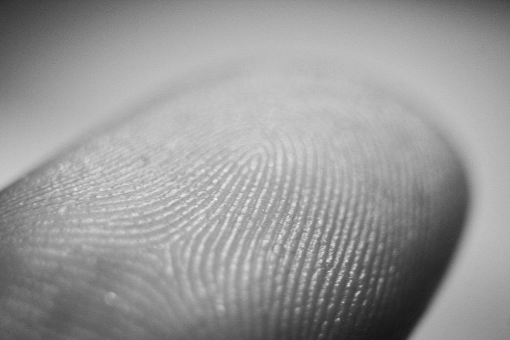 Image: Fingerprint details. Credit:Frettie, via Wikimedia.