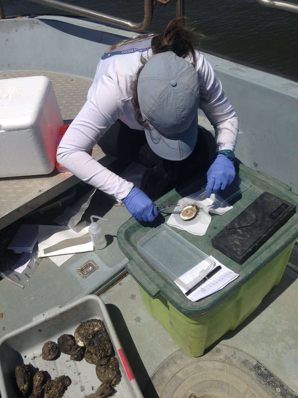 Image of Hollis Jones sampling an oyster in the field!
