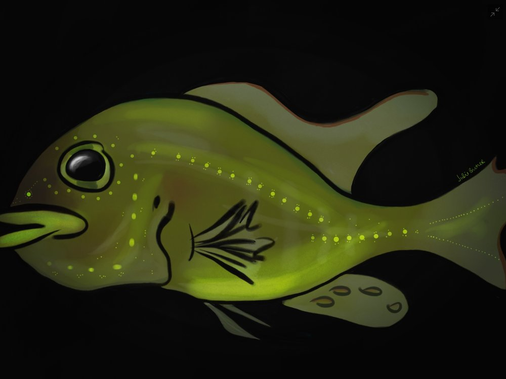 Illustration of DASPEI stained ciclid fish. Credit: Julie Butler.