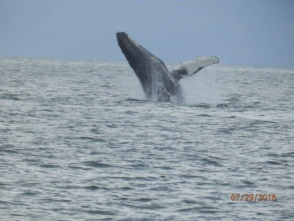 Whale watching in Alaska! by Sydney Clark.