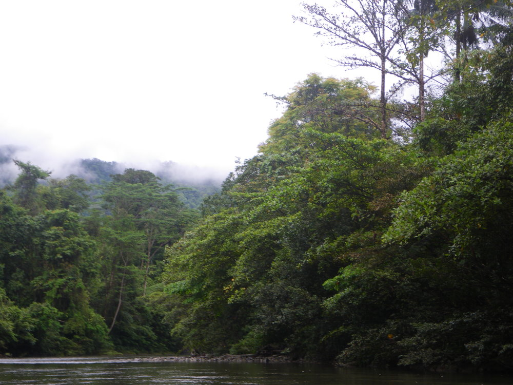 New Guinea Rainforest. Image by Chris Austin, LSU.