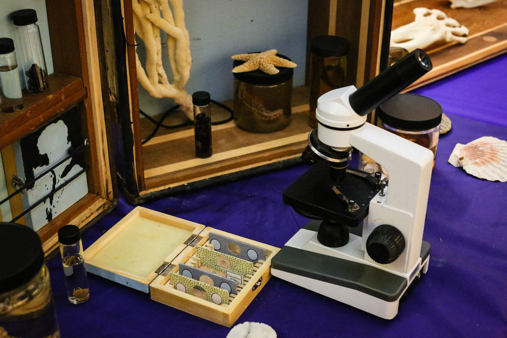 A microscope exhibit in Crude Life lets visitors explore microscopic Gulf of Mexico life. Photo by Paige Jarreau.