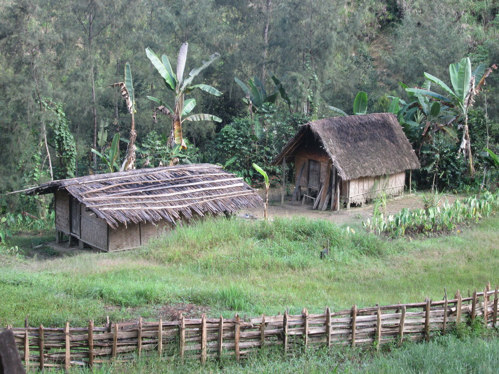 Field accommodations in Kaironk Village in the highlands of Madang Province (6,000 foot elevation). With assistance from local peoples and the Papua New Guinea National Museum, fieldwork in this area of Papua New Guinea has provided valuable tissue samples and voucher specimens for this research. Photo by Chris Austin.