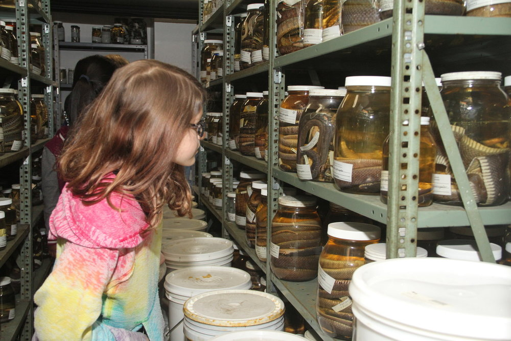 Rebekah Amoroso checking out the specimens on a behind-the-scenes tour of the LSU Museum of Natural Science.
