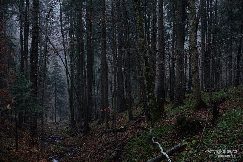 kolowca-bieszczady-forest.jpg