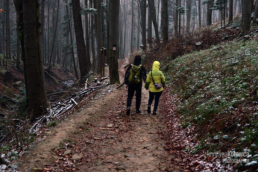 kolowca-bieszczady-winter-forest.jpg
