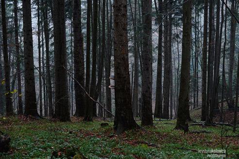 kolowca-bieszczady-winter-forest-I.jpg