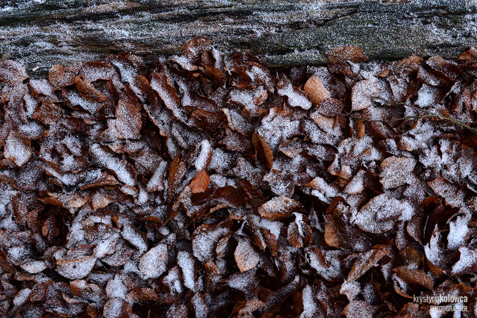 kolowca-bieszczady-winter-Ii.jpg