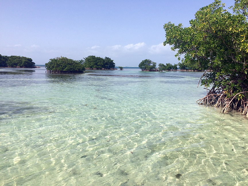 GUADELOUPE - cul de sac du marin, mangrove tour