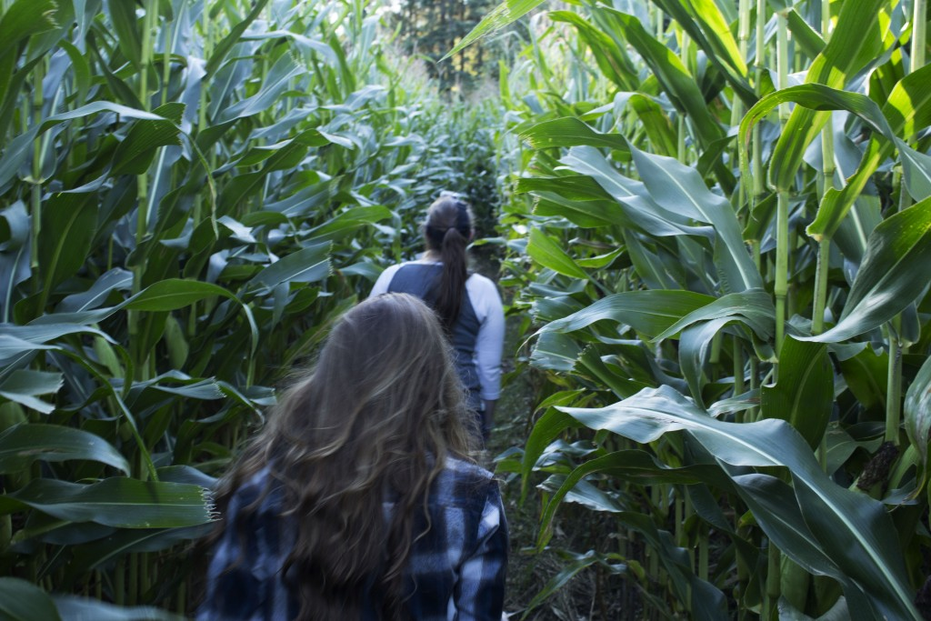 Engwall's Corn Maze offers entertainment to people of all ages at a reasonable price. BRAD EISCHENS/STATESMAN