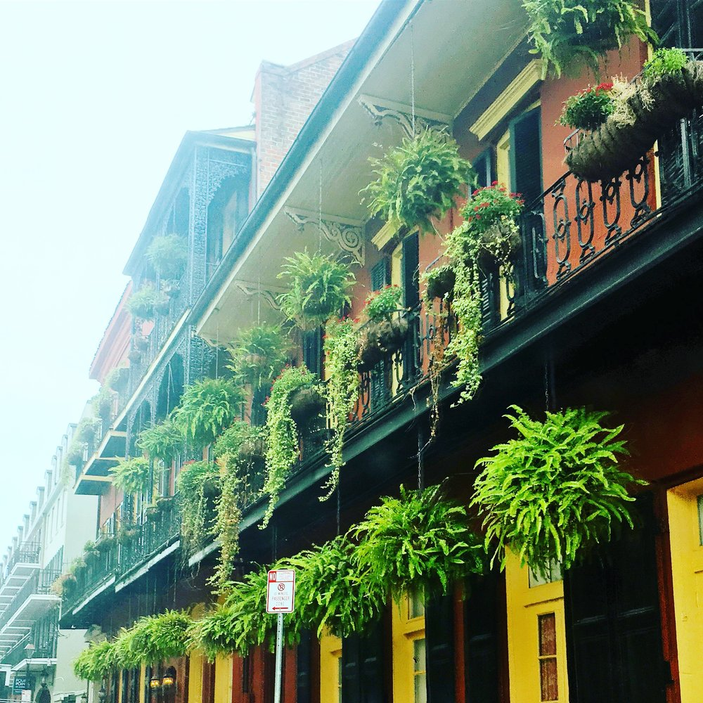 Ferns and Balconies on Royal Street