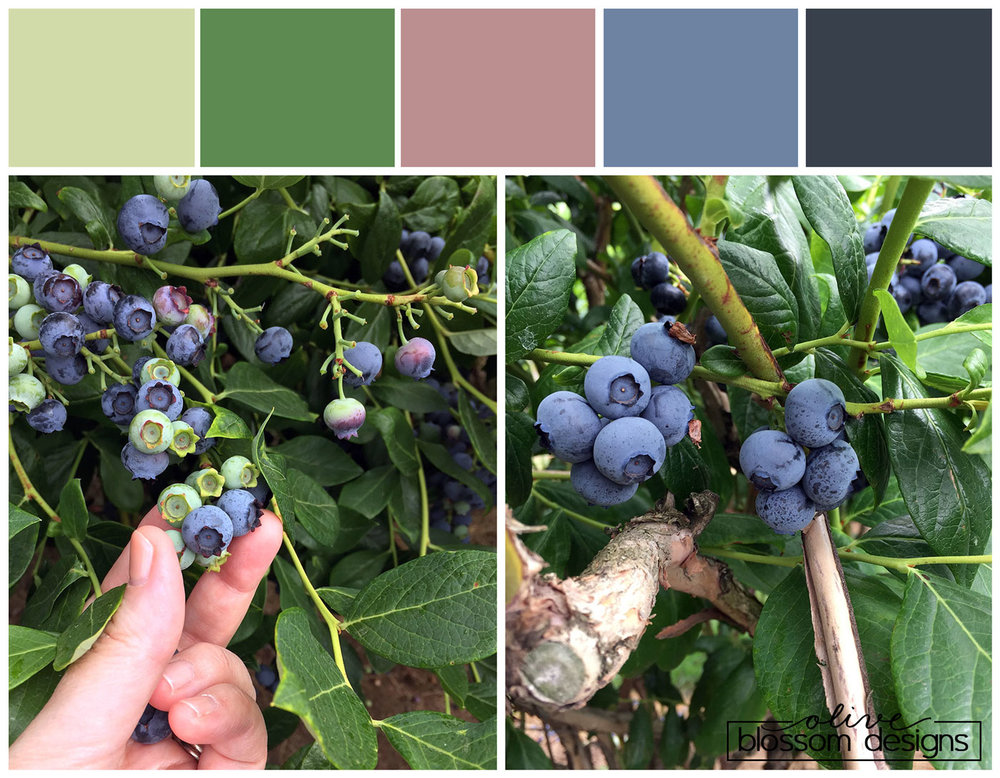 Beautiful Blueberry Color Palette