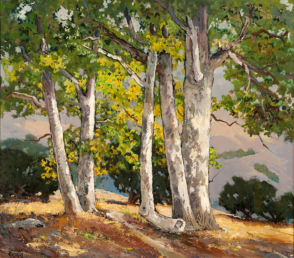 """Sycamores"" by Douglas Shively"