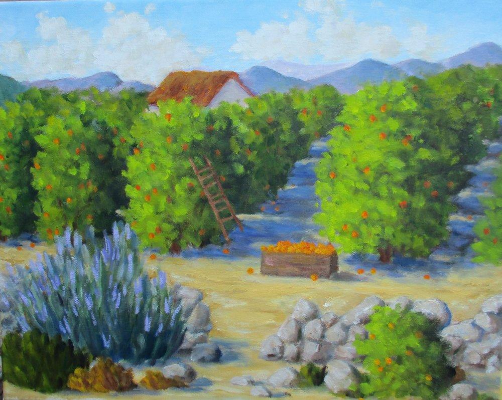 PATRICIA OHEARN.AN OJAI ORANGE GROVE. OIL.16X20.jpg