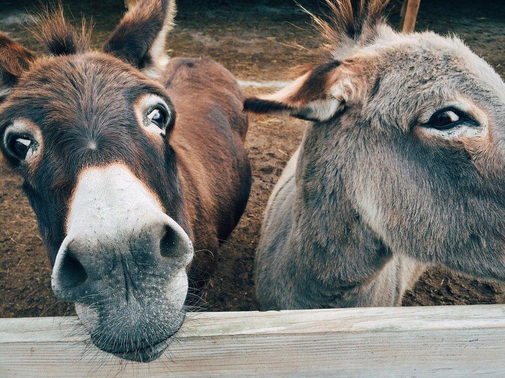 animals-close-up-cute-208821.jpg