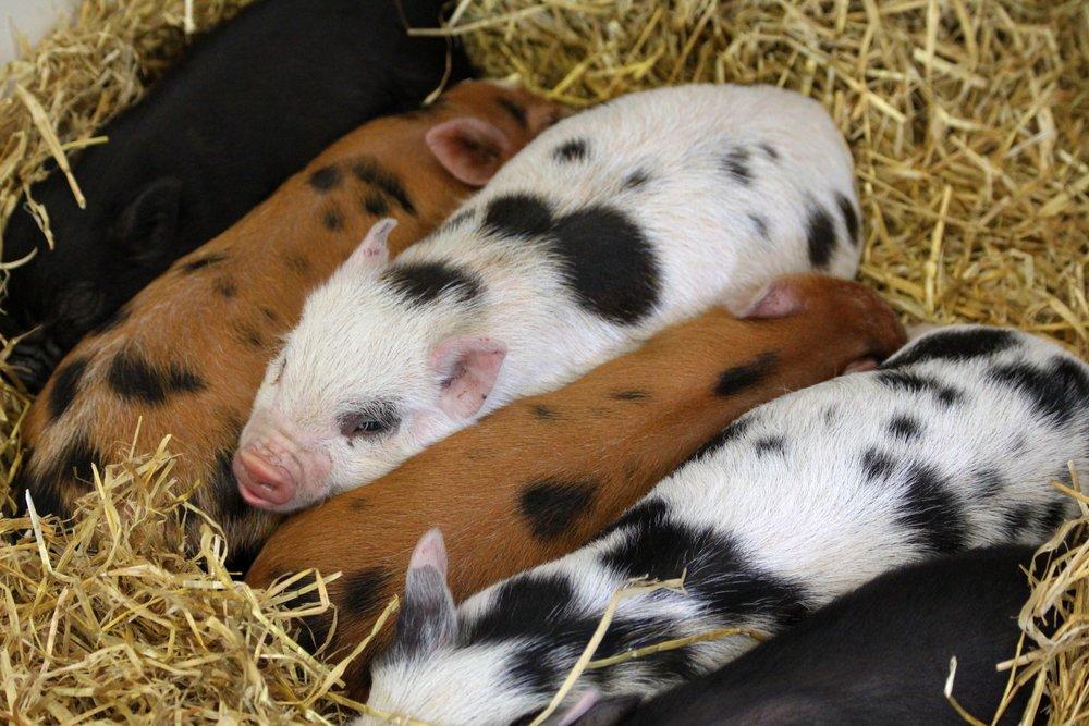 agriculture-animals-barn-133468.jpg