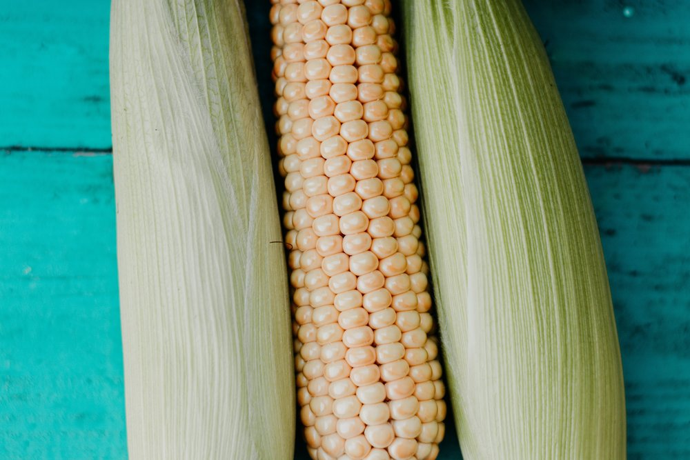 agriculture-close-up-color-1353865.jpg