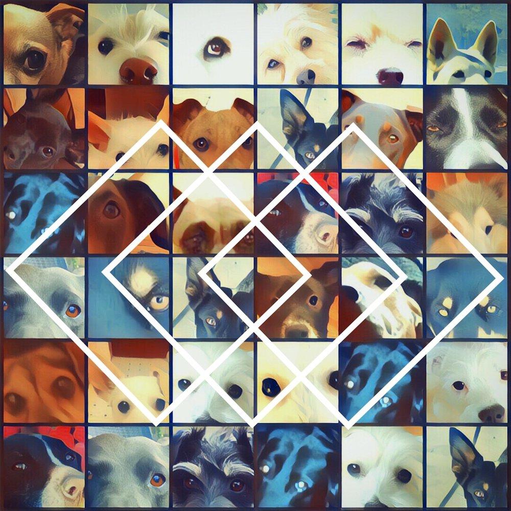 Dog_eyed.jpg