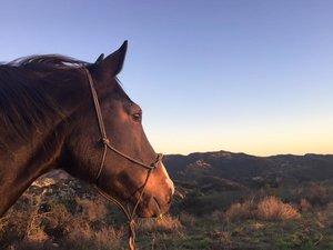 Horses Breaking Free
