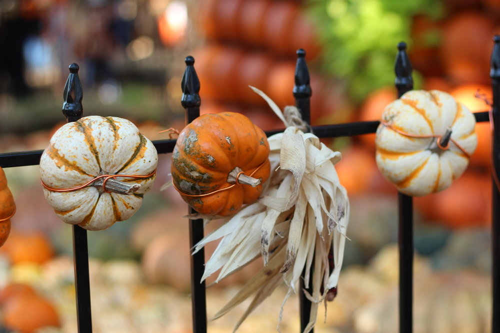fall at dallas arboretum