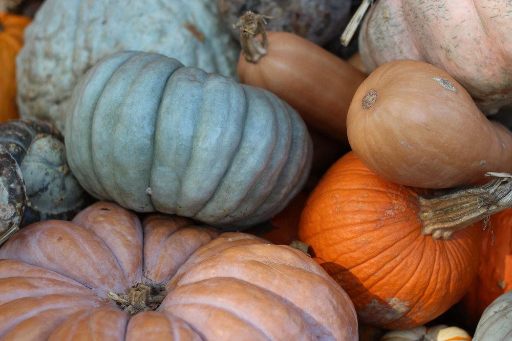 fall at the dallas arboretum