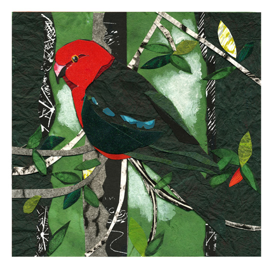 King Parrot2.jpg