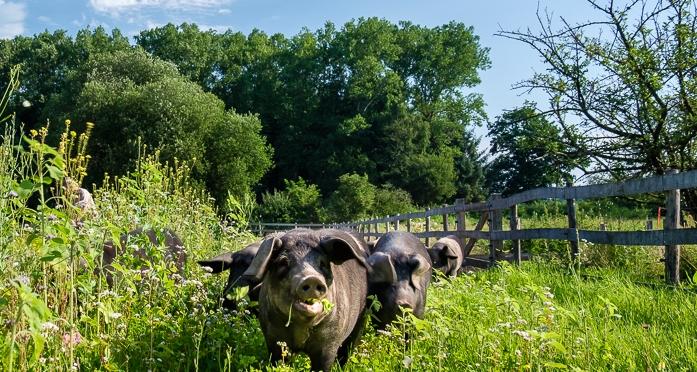 Spezielle Ansaaten als Grünfutter auf den Weiden