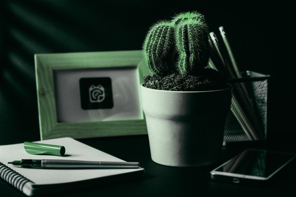 Workplace-Wellbeing-Cactus.jpg