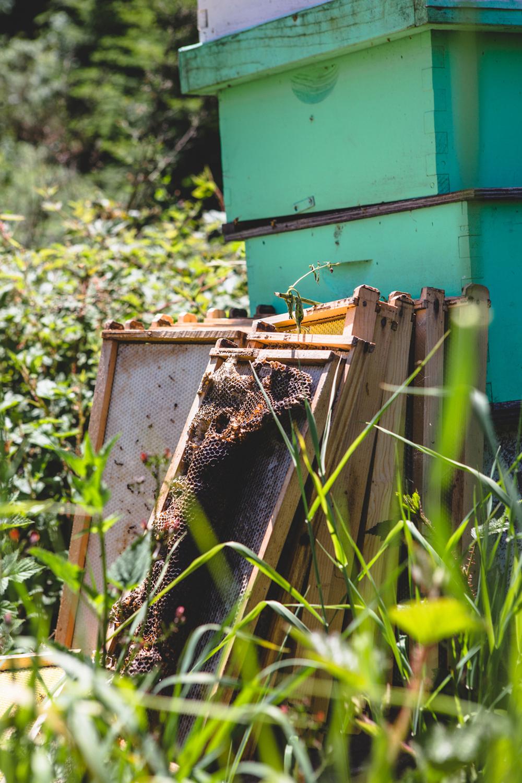 bees_02-2.jpg