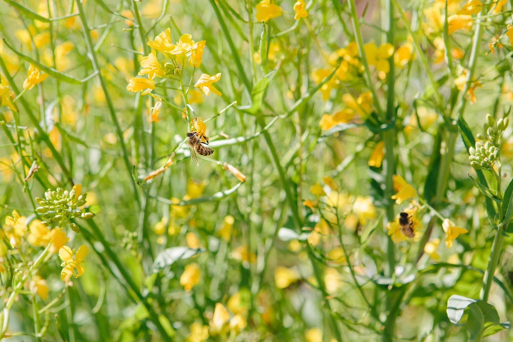 bees_small-2.jpg